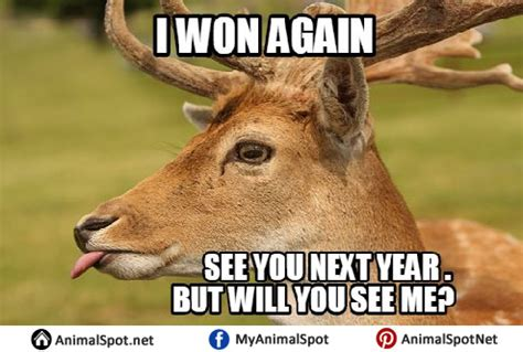 Deer Hunting Meme - deer memes