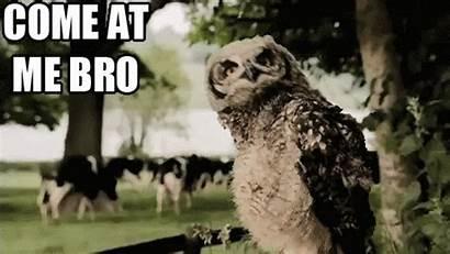 Come Bro Owl Head Shaking Meme Text