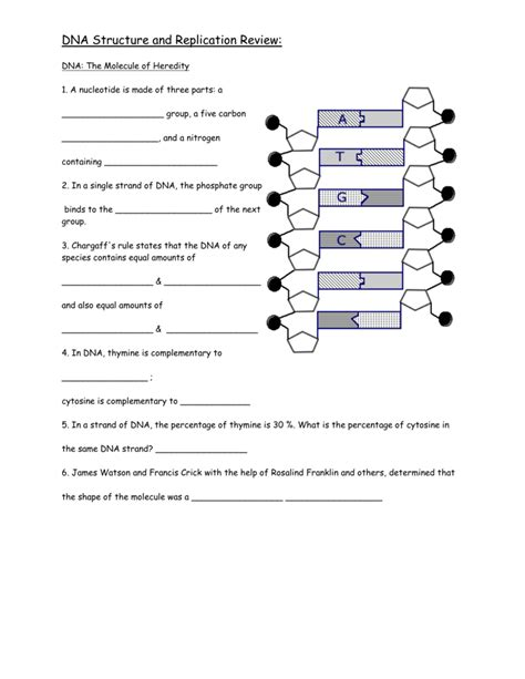 worksheet dna the molecule of heredity worksheet grass