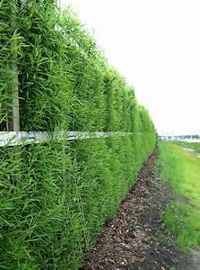 Mur Anti Bruit Végétal : mur antibruit le plus efficace mur antibruit routier mur ~ Melissatoandfro.com Idées de Décoration