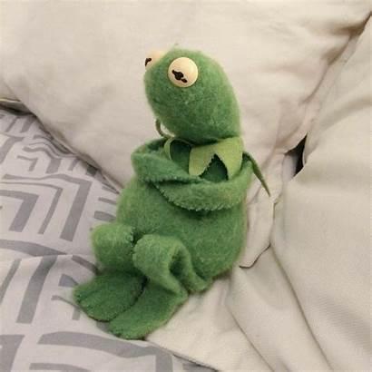 Kermit Meme Memes Frog Reaction Wattpad Mood