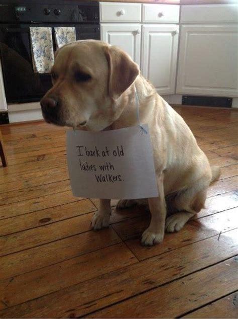 funny dog quotes part  weneedfun