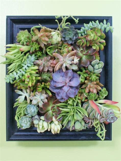 How To Plant A Vertical Succulent Garden by How To Make A Succulent Garden Shadowbox Diy