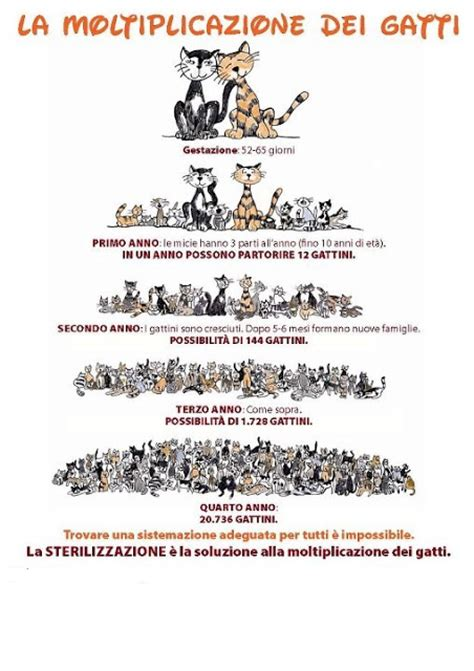 tappezzeria gatti gatti perch 232 232 importante la sterilizzazione 176 176 gonews it