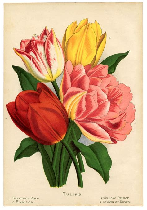 instant art printable gorgeous tulips  graphics fairy