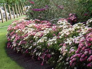 Petit Arbuste Fleuri : avoir une haie fleurie tout l 39 t dans son jardin ~ Premium-room.com Idées de Décoration