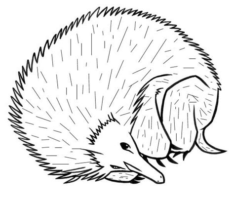 porcupine drawing coloring child coloring