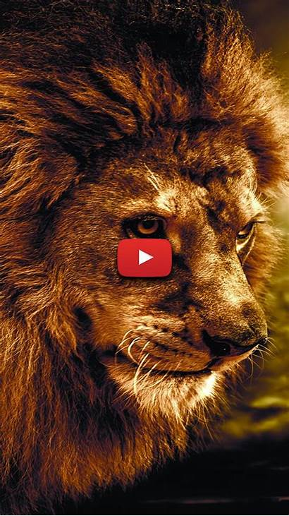 Lion King Wallpapers Aesthetic Majestic Badass Moving
