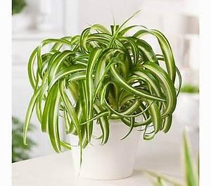 Zimmerpflanzen Für Schlafzimmer : gr nlilie interessante zimmer pflanzen zimmerpflanzen ~ A.2002-acura-tl-radio.info Haus und Dekorationen