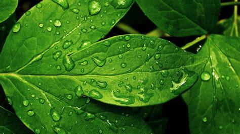 windows 8 bureau groene bladeren met waterdruppels bureaublad achtergronden
