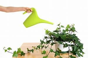 Efeu Als Zimmerpflanze : efeu pflegen gie en d ngen schneiden und mehr ~ Indierocktalk.com Haus und Dekorationen