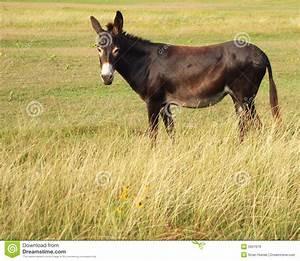 Mule Stock Image  Image Of Protection  Donkey  Farm  Ranch