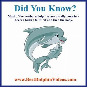 Dolphin Fact  1