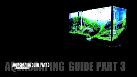 Aquascaping Guide by Aquascaping Guide Part 3 Maintenance