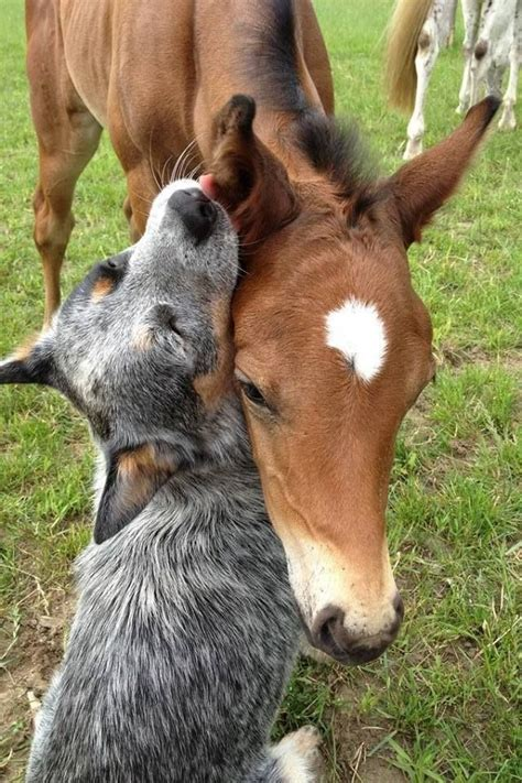 horses facts terrible horse dog friends related friendship