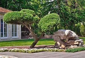 Pflanzen Japanischer Garten : pflanzen japanischer garten ~ Lizthompson.info Haus und Dekorationen