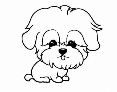 Maltese Colorear Coloring Para Dibujo Dibujos Animales