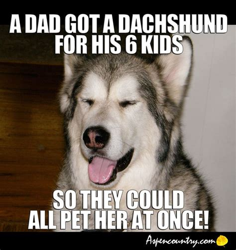 Dog Jokes Meme - easygoing dog joke a dad got a dachshund for his 6 kids so they could all pet her at once