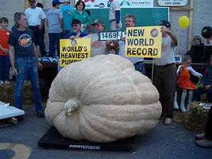 Weird World Records. - Neatorama