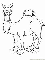 Camel Coloring Pages Printable Template Crafts Kindergarten Animals Preschool Animal Bible Camels Colouring Students Shapes Children Templates Rebekah Shape Sunday sketch template