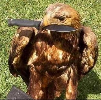 big badass bird  prey   tropes