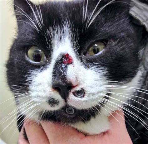 Cat Shot with BB Gun