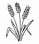 Wheat Clipart Drawing Clip Plant Symbols Head Agricultural Revolution Christian Cliparts Pages Symbol Harvest Stalk Bread Coloring Barley Colouring Greek sketch template