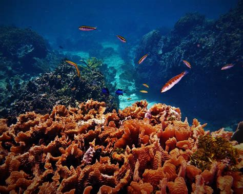 Overfishing, reef decline threaten greater Caribbean and Pacific island fisheries - IUCN reports ...