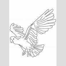 91 Colouring Pictures Of New Zealand Birds, Birds Zealand Of Colouring Pictures New