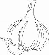 Garlic Coloring Pages Colouring Gourd Clove Bulb Template Flavor Vegetables Picolour sketch template