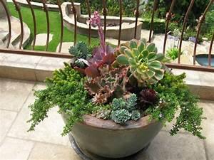 Plantes D Extérieur Pour Terrasse : plante en pot pour terrasse 50 id es fra ches ~ Dailycaller-alerts.com Idées de Décoration