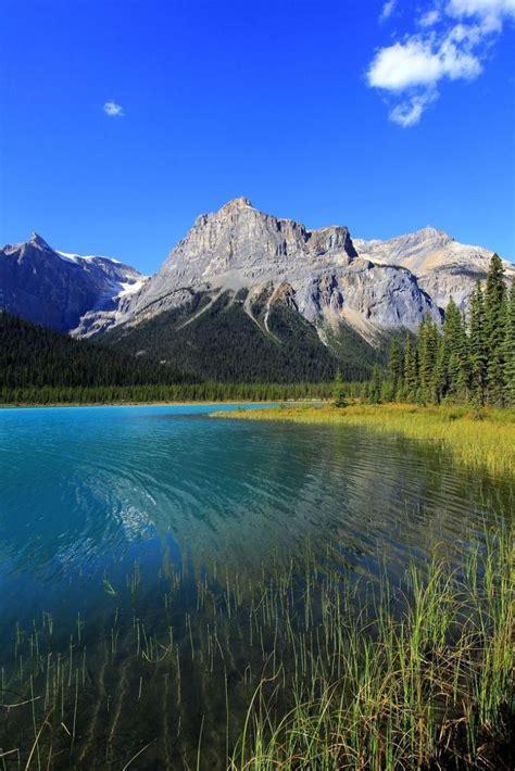 call  nature yoho national park british columbia