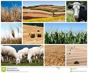 Agriculture, Collage, Stock, Photo, Image, Of, Bale, Collection