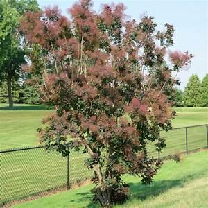 Arbre Ombre Croissance Rapide : arbres pour haie liste ooreka ~ Premium-room.com Idées de Décoration