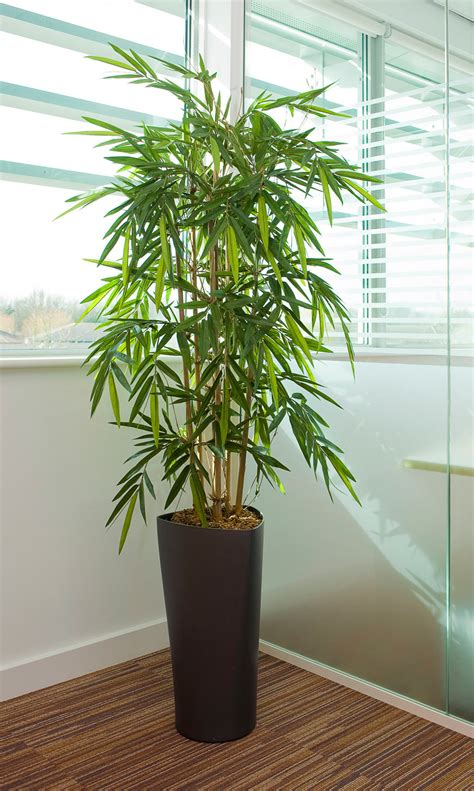 bamboo in a pot 5ft artificial bamboo in delta pot office furniture warehouse