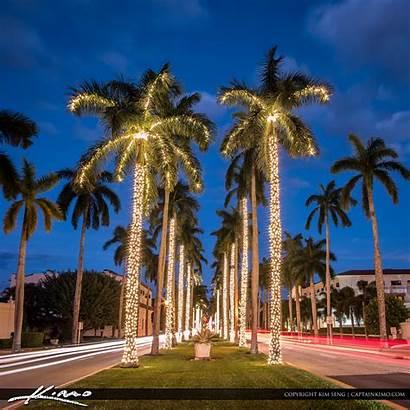 Palm Tree Christmas Beach Island Lights Royal
