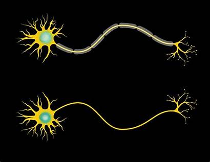 Neuron Electrical Myelin Communication Axon Neurons Covering