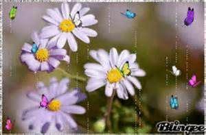 images  butterflies  pinterest butterfly