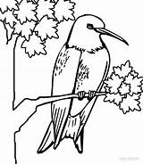 Hummingbird Coloring Pages Hummingbirds Printable Humming Cool2bkids Bird Adult Colors Cartoon Books sketch template