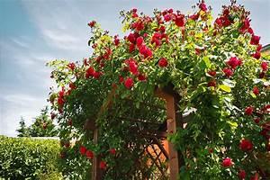 Englischen Garten Anlegen : englischen garten anlegen meister meister blog ~ Whattoseeinmadrid.com Haus und Dekorationen