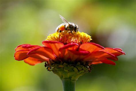 bees honeybee honeybees zombie honey canada bee tiny flies case fly die help flights then take night create spring bc