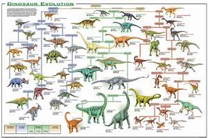 Evolution of Reptiles and Birds   prescribed evolution