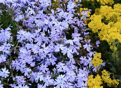 great garden plants where to buy plants 11 shops for cheap or