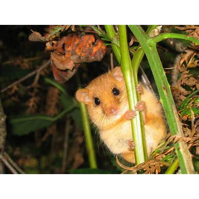 Dormouse training - Peoples Trust for Endangered Species