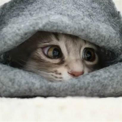 Shy Kitten Cats Kittens Meme Reddit Funny