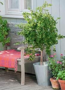 Hortensie Umpflanzen Im Topf : naschgarten gro e ernte auf kleiner fl che mein sch ner garten ~ Orissabook.com Haus und Dekorationen