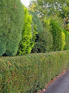 When And How To Prune An Evergreen