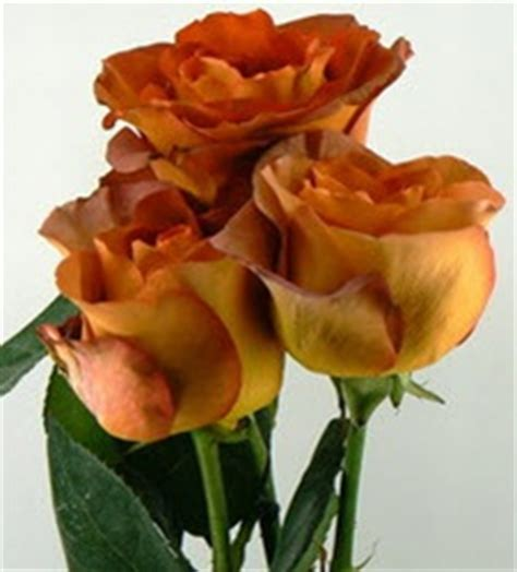 Beds and borders, city, containers, cottage/informal, flower arranging. Wholesale Bulk Discount Cut Roses Colombia Ecuador Coffee ...