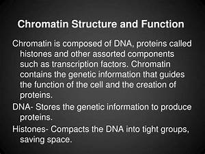 Ppt - Nucleus And Ribosomes Powerpoint Presentation