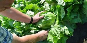 Wann äpfel Ernten : willkommen bei behr anbau und ernte ~ Lizthompson.info Haus und Dekorationen